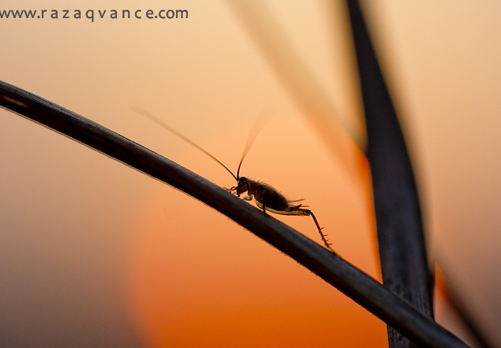 AT THE SUNSET - MACRO PHOTOGRAPHY