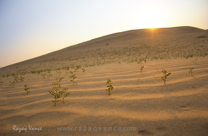 DANCING LIGHT IN A DESERT