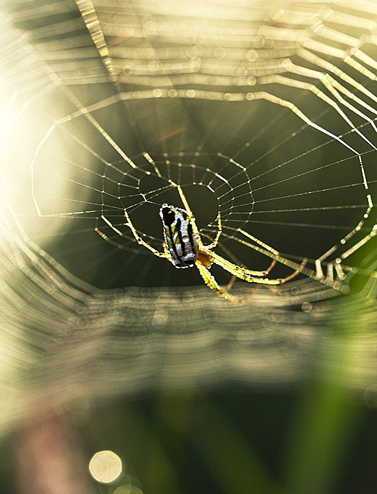 A Portrait Of Spider life In Winter Morning Light
