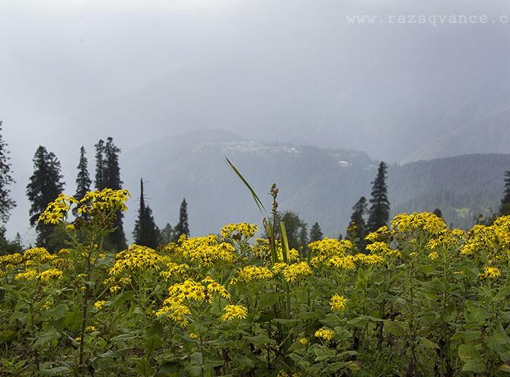 Unmatchable landscape Beauty of Paya Meadows