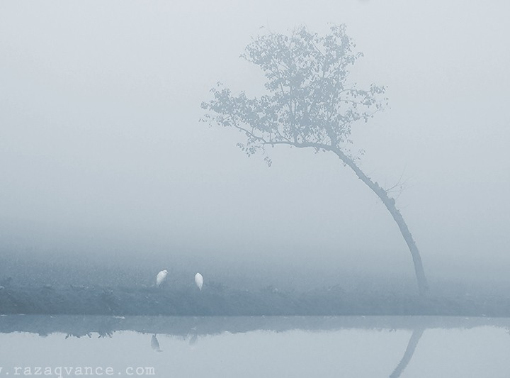 Nature Photography In A Foggy Winter Morning
