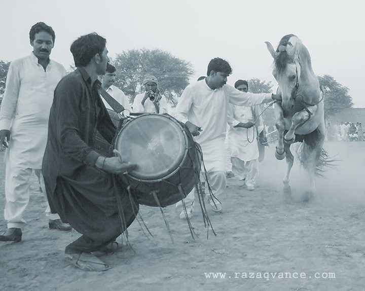 A Dancing Horse On Drum Beat