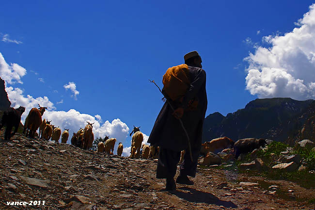Life Of Shepherds In Swat Valley Pakistan
