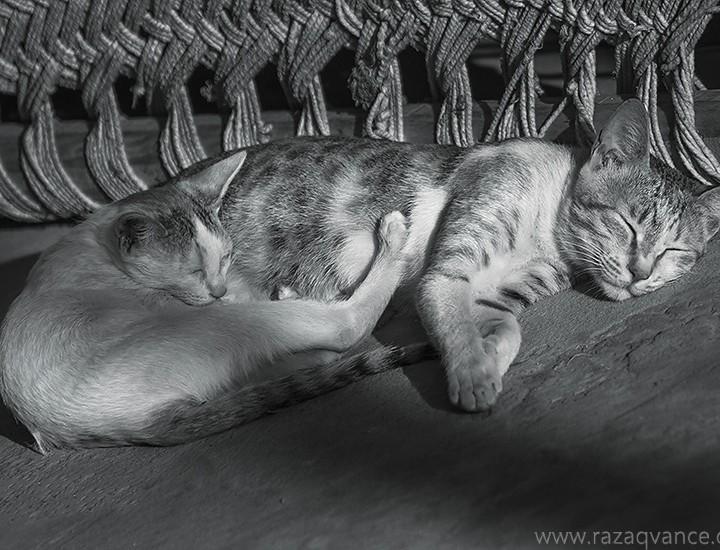 A Portrait Of Sleeping Beauty