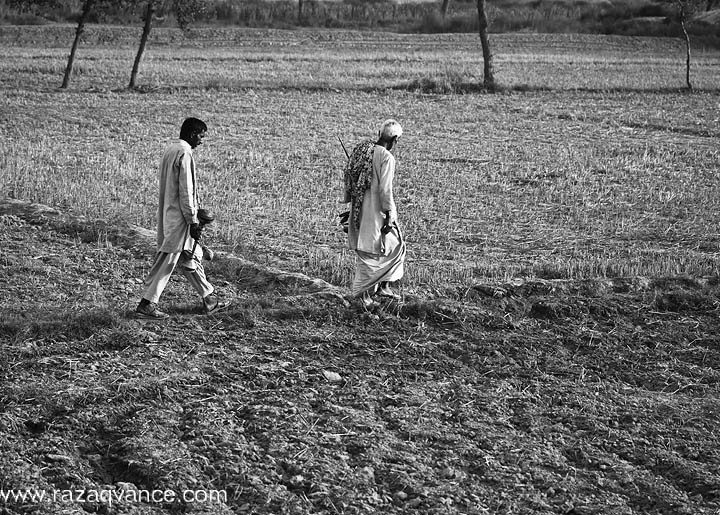 Farmers Going For Daily Work In The Fields