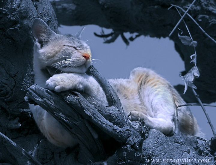 A Cat Or A  Sleeping Beauty On A Tree