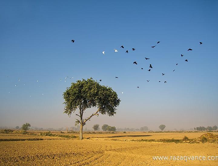 Stunning Natural Beauty Of Village Landscape