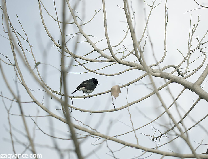 Composing Some Elegant Nature Pictures In Winter