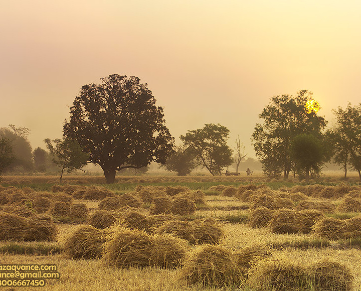 WARM AND VIBRANT MORNING LIGHT IN THE HARVEST SEASON