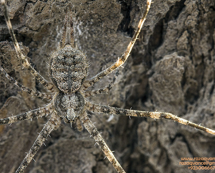 Nature Photography And Art OF Camouflage In Insects
