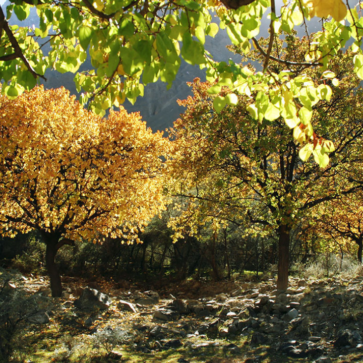 Heart Touching Colors Of Autumn In Hunza Valley Pakistan