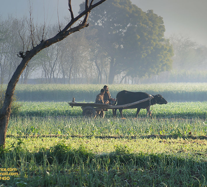 Village Life Simplicity And Rural Landscape Beauty Of Countryside Pakistan