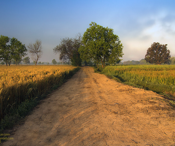 Enchanting And Heart Touching Beauty Of Village Landscape In Vibrant Morning Light