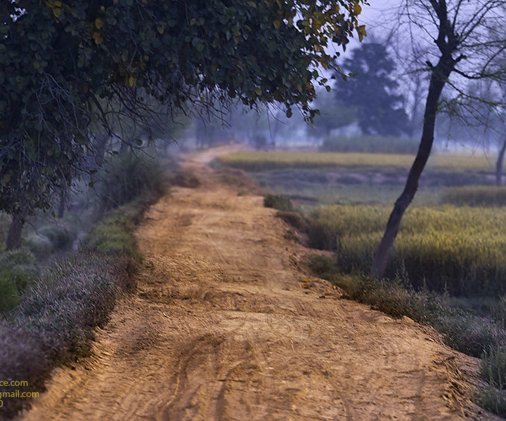 A Way Lit By The Morning Hues in The Fields Of Punjab Pakistan