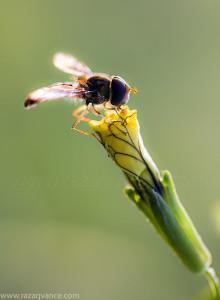 How To Capture Elegant Nature Pictures