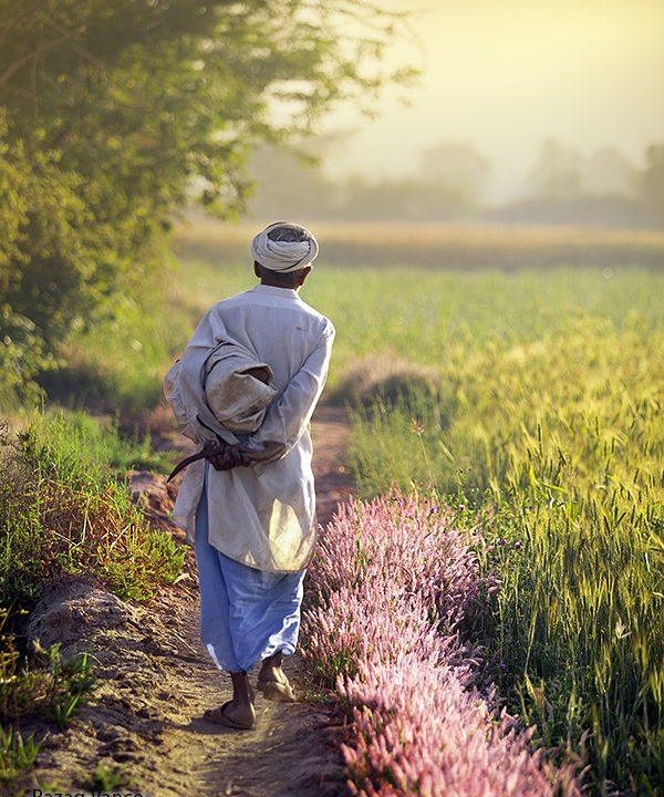 April Morning and Daily Life of a Farmer in a Village of Punjab Pakistan.