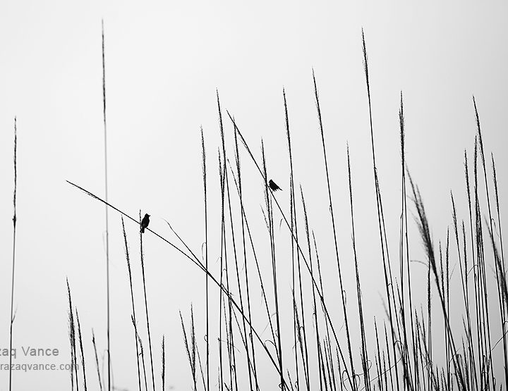 Birds in Conversation: Minilist Photography