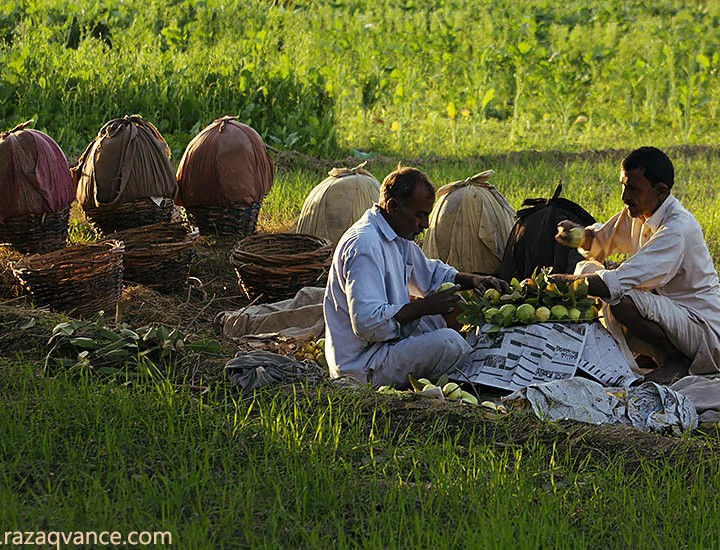 Busy Life Of Orchard Farmers In An Asian Village