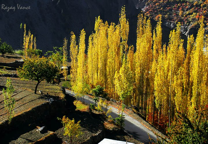 VIBRANT COLORS OF AUTUMN IN HUNZA VALLEY PAKISTAN