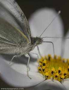 Use Of Differential Focus To Get Best Creative Macro Pictures