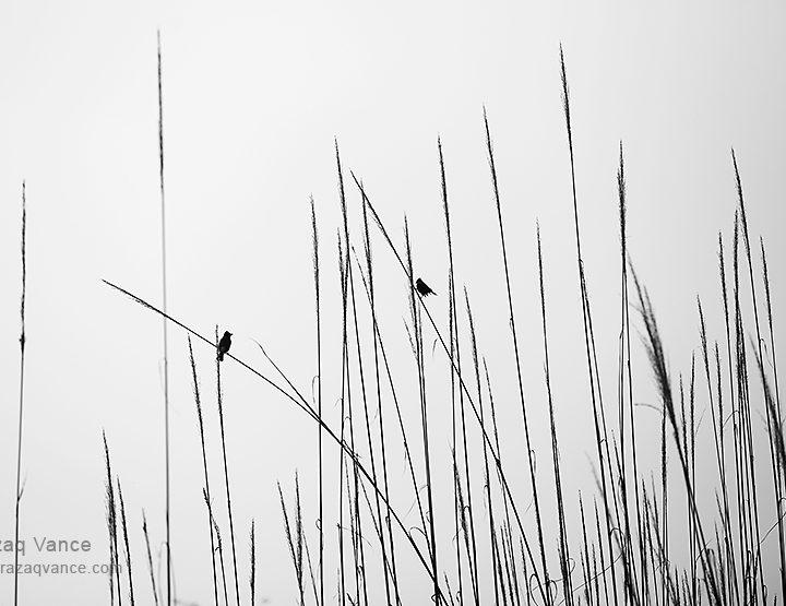 Birds in Conversation: Minilist Photography