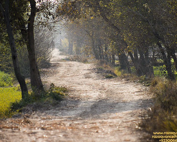Autumn Hues and Dirt Road Through The Fields in Winter